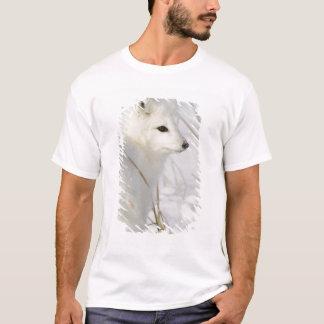 North America, Canada, Manitoba, Churchill. T-Shirt