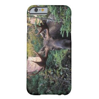 North America, Canada, Nova Scotia, Cape Breton Barely There iPhone 6 Case