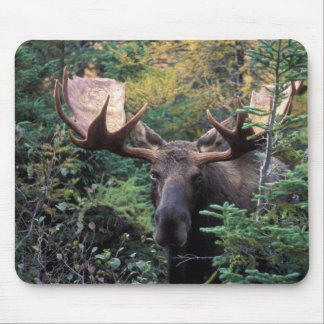 North America, Canada, Nova Scotia, Cape Breton Mouse Pad