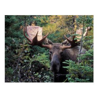 North America, Canada, Nova Scotia, Cape Breton Postcard