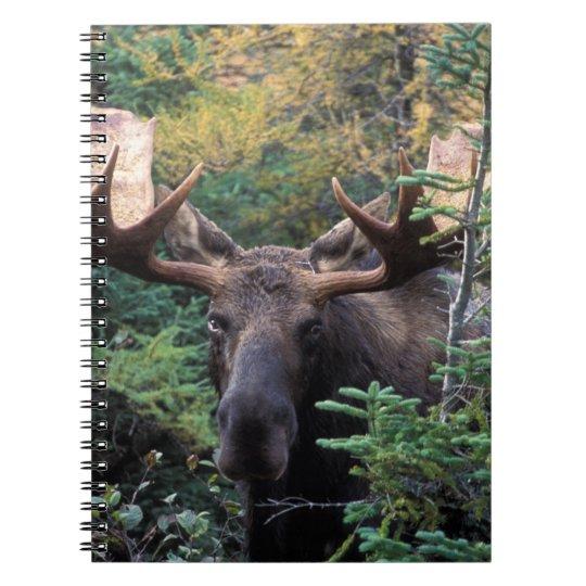 North America, Canada, Nova Scotia, Cape Breton Spiral Notebook