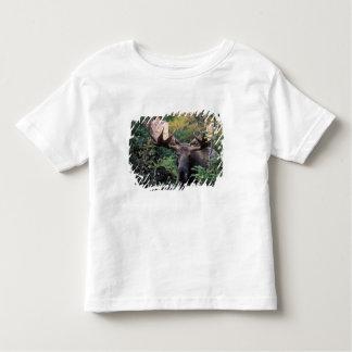 North America, Canada, Nova Scotia, Cape Breton Toddler T-shirt