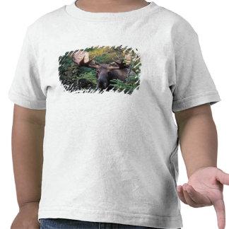 North America Canada Nova Scotia Cape Breton Tshirt
