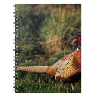North America, Canada, Nova Scotia, Eastern 2 Notebook