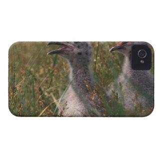 North America, Canada, Nova Scotia, Margaree Case-Mate iPhone 4 Case