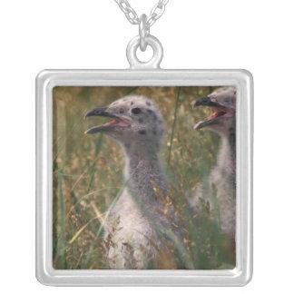 North America, Canada, Nova Scotia, Margaree Silver Plated Necklace