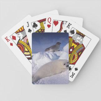 North America, Canada, Quebec, Iles de la 2 Card Decks