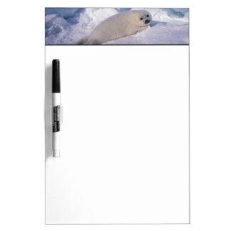 North America, Canada, Quebec, Iles de la 2 Dry-Erase Board