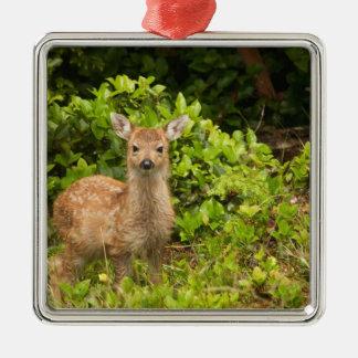 North America, Canada, Queen Charlotte 2 Metal Ornament