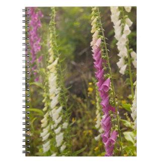 North America, Canada, Queen Charlotte Islands, 2 Notebook