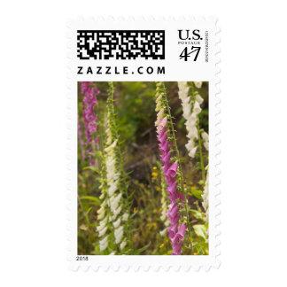 North America, Canada, Queen Charlotte Islands, 2 Stamp