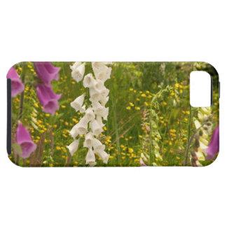 North America, Canada, Queen Charlotte Islands, 5 iPhone SE/5/5s Case