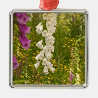 North America Canada Queen Charlotte Islands 5 Ornament