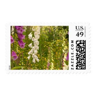 North America, Canada, Queen Charlotte Islands, 5 Stamp