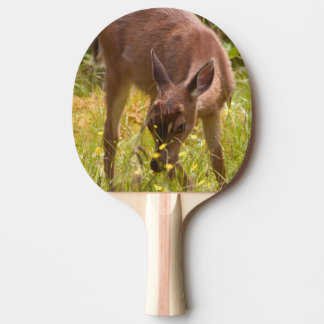 North America, Canada, Queen Charlotte Ping-Pong Paddle