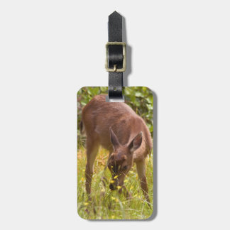North America, Canada, Queen Charlotte Travel Bag Tags