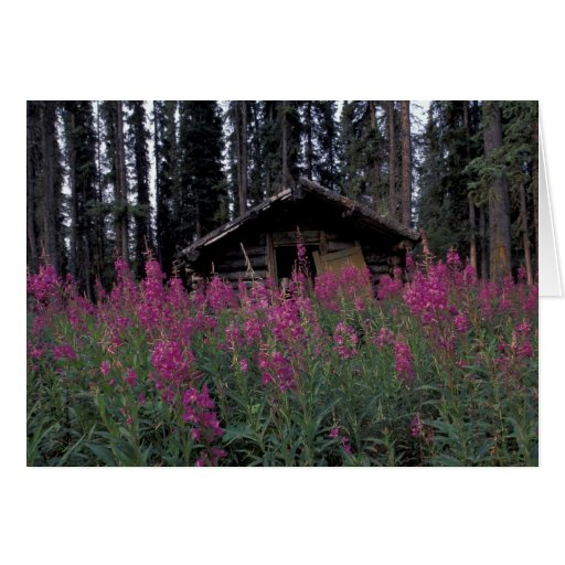 North America, Canada, Yukon. Abandoned trappers Greeting Card