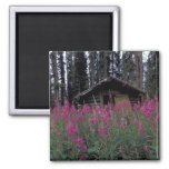 North America, Canada, Yukon. Abandoned trappers 2 Inch Square Magnet