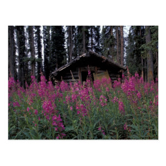 North America, Canada, Yukon. Abandoned trappers Postcard