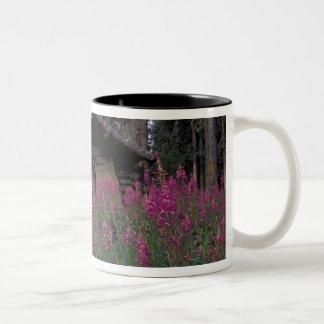 North America, Canada, Yukon. Abandoned trappers Two-Tone Coffee Mug