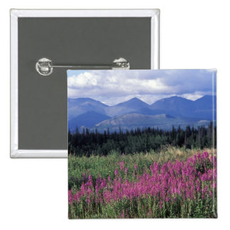 North America, Canada, Yukon. Fireweed blooms 2 Inch Square Button