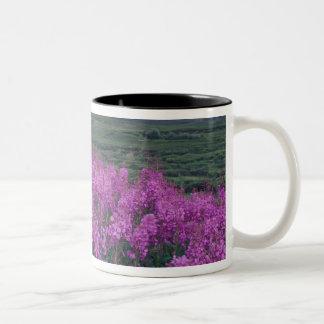 North America, Canada, Yukon. Fireweed blooms Two-Tone Coffee Mug