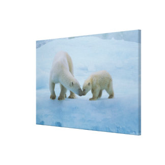 North America, Canadian Arctic. Polar bear and Stretched Canvas Print