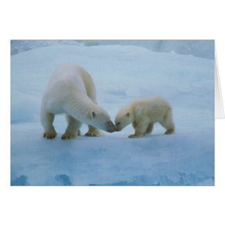 North America, Canadian Arctic. Polar bear and Greeting Card