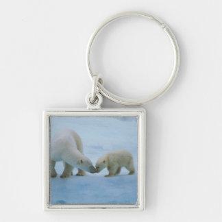 North America, Canadian Arctic. Polar bear and Keychain