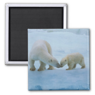 North America, Canadian Arctic. Polar bear and Refrigerator Magnets
