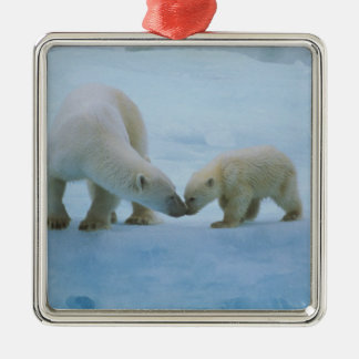 North America, Canadian Arctic. Polar bear and Square Metal Christmas Ornament