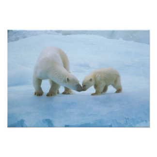 North America, Canadian Arctic. Polar bear and Art Photo