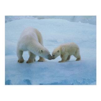 North America, Canadian Arctic. Polar bear and Postcard