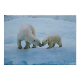 North America, Canadian Arctic. Polar bear and Poster