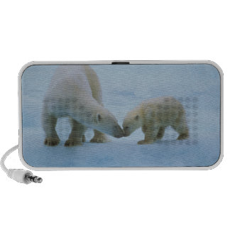 North America, Canadian Arctic. Polar bear and Travelling Speaker