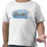North America, Canadian Arctic. Polar bear and Tees