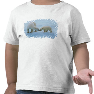 North America, Canadian Arctic. Polar bear and Tees