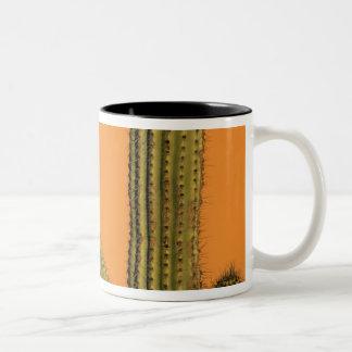 North America, Mexico, Baja California, Cabo Two-Tone Coffee Mug
