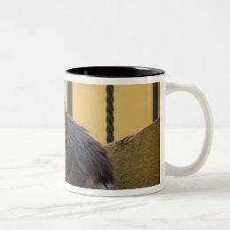 North America, Mexico, San Miguel de Allende. Two-Tone Coffee Mug