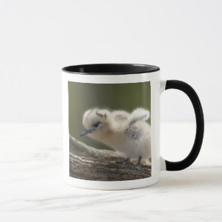 North America, Northwestern Hawaiian Islands, 2 Mug