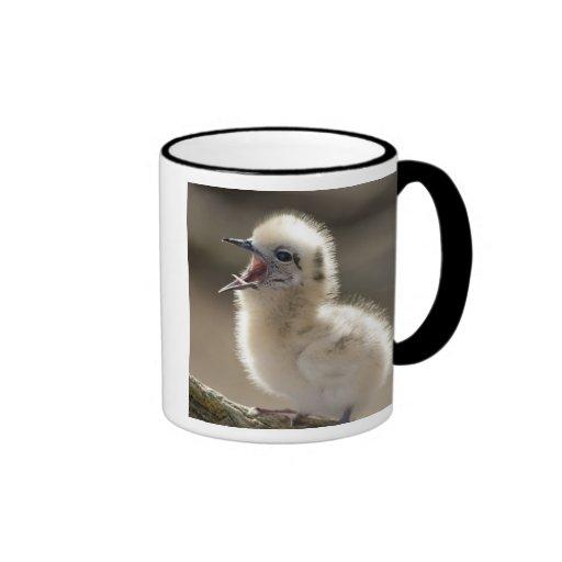 North America, Northwestern Hawaiian Islands, Ringer Mug