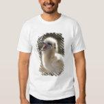 North America, Northwestern Hawaiian Islands, Tee Shirt