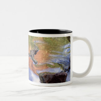 North America, U.S.A., Arizona, Havasu Canyon, 3 Two-Tone Coffee Mug