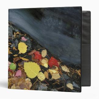 North America, US, ME, A stream in fall. Binders