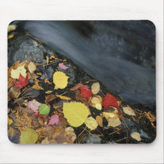 North America, US, ME, A stream in fall. Mouse Pad