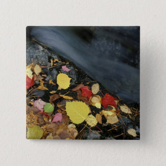 North America, US, ME, A stream in fall. Pinback Button