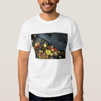 North America, US, ME, A stream in fall. T Shirt
