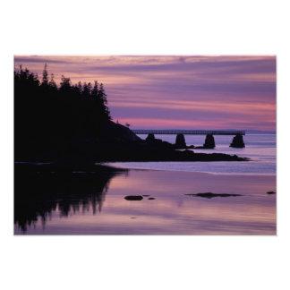 North America, US, ME, Isle Au Haut. Duck Art Photo