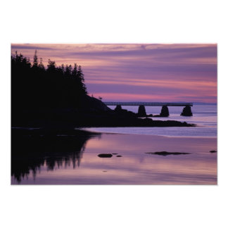 North America, US, ME, Isle Au Haut. Duck Photo Art