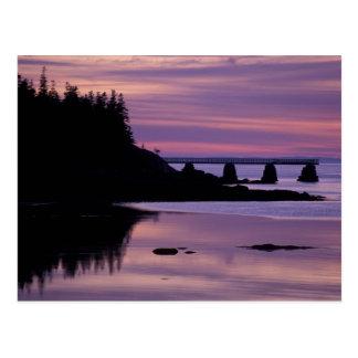 North America, US, ME, Isle Au Haut. Duck Postcard